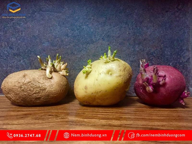 Những loại rau củ không được ăn sống - Nệm Bình Dương